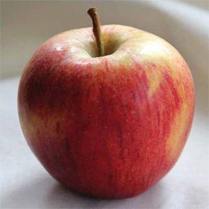 Pete kann heute keine Äpfel mehr essen: Im Asylheim waren sie das einzige Obst (Foto: DAH)